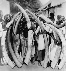 Dedicated Elephant Hunters