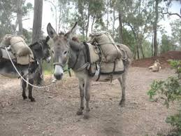 Pack Donkeys