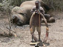 Poacher Caught in the Act of Poaching Elephant