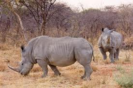 We are Serious Rhino Lovers